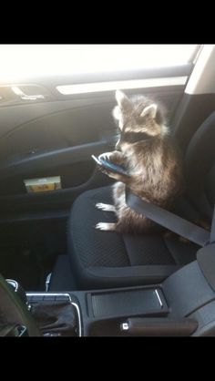 Funny Animal Pictures Of The Day Volume 8 Pics) Funny Animal Pictures Of The Day Volume 8 Pics),Tiere Funny Animal Pictures Of The Day Volume 8 Related Funny Animals. Cute Funny Animals, Funny Animal Pictures, Cute Baby Animals, Animals And Pets, Animal Pics, Strange Animals, Funny Pics, Videos Funny, Baby Raccoon