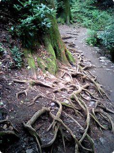 designjoonos: 高尾山に登る。 타카오산에 오르다