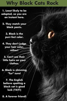 black cat Black Cats Appreciation Day is here but black cats are awesome all year round. Here are some reasons, and click over to find more black cat love! Crazy Cat Lady, Crazy Cats, I Love Cats, Cool Cats, Cat Kawaii, Black Cat Appreciation Day, Cat Behavior, Cat Facts, Beautiful Cats
