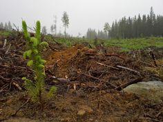 Raivaaja, Evon metsäalan perustutkinnon opiskelijan blogi.