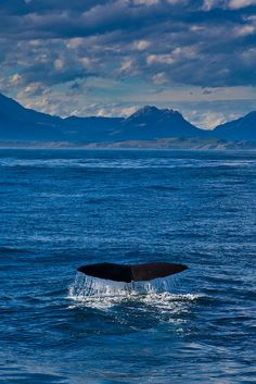 Watching whales fluke in Kaikoura, New Zealand | The Planet D: Adventure Travel Blog