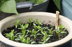 How to grow herbs from seed on your windowsill