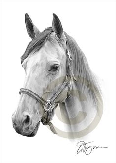 Hey, I found this really awesome Etsy listing at https://www.etsy.com/listing/204476545/horse-pencil-drawing-print-a4-size