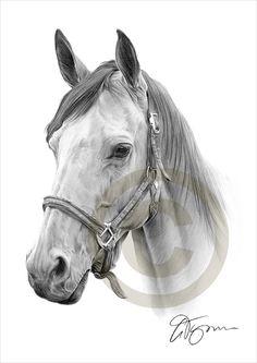 Bleistift Zeichnung Vorlagen Drucken eines Pferdes nach UK Künstler Gary Tymon. Originalgrafiken vollzog sich mit Bleistift schwarz Aquarell auf Aquarellpapier, und diese Drucke sind eine limitierte Auflage von nur 50. Drucken ist ist 11,75 Zoll x 8,25 Zoll (A4) und individuell