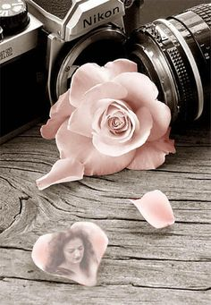 camera and rose...harsh and soft lines toether