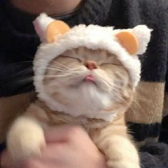 Cute Baby Cats, Cute Little Animals, Kittens Cutest, Cats And Kittens, Silly Cats, Cute Cat Gif, Funny Cats, Gatos Cool, Image Chat