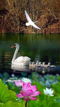 Flying Jewels, God`s Awesome & Gorgeous Creation. Pretty Birds, Beautiful Birds, Animals Beautiful, Bird Pictures, Nature Pictures, Royal Wallpaper, Swan Love, Tropical Birds, All Birds