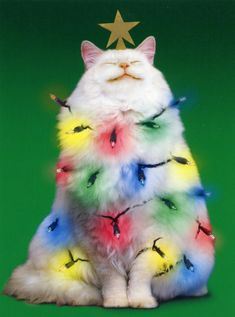 kitty cats - pics of cats - cat health - cat at work - funny cats picture I Love Cats, Cute Cats, Funny Cats, Funny Animals, Cute Animals, Christmas Animals, Christmas Cats, Christmas Lights, Merry Christmas