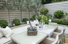 This small garden Mediterranean planting scheme includes Olive trees, boxwood…