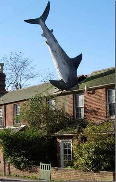 SHARK ATTACK! – the roof that the shark ate
