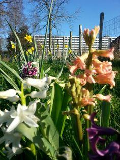 Flowerfull Bijlmer