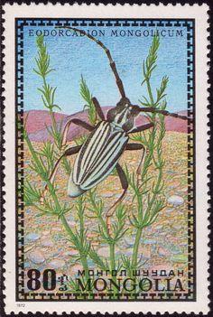 Mongolia, 1972, Edorcadion mongolicum