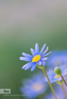blue emergence... by fgombert. Please Like http://fb.me/go4photos and Follow @go4fotos Thank You. :-)