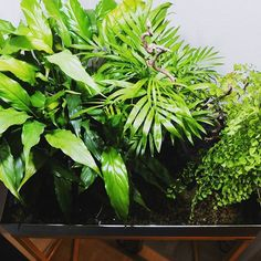 #roomgardens #jungle