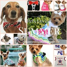 Daisey's Doggie Chic Summer Apparel & Accessories Collection for Pets