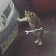 Make sum wholesome memes already Sad Cat Meme, Cute Cat Memes, Funny Cats, Funny Animals, Cute Animals, Funny Memes, Dankest Memes, Funny Comedy, Cat Crying