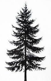 Pine Tree Drawings Black And White Tree Drawings Pencil