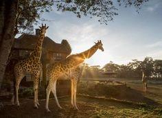 THE SAFARI COLLECTION - The Safari Collection