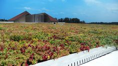 Montgomery County Schools Green Roof by LiveRoof Maryland School, Green Roof System, Green School, School Sets, Montgomery County, Building Materials, County Schools, Public School, Elementary Schools