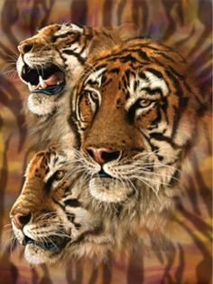 Tiger Stripes-3 Bengals-Art Stephen Gardner-500 Piece Jigsaw Puzzle-SunsOut New, $12.50