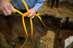 Veterinary researchers at UC Davis are investigating possible links between a disorder found in newborn horses and childhood autism.