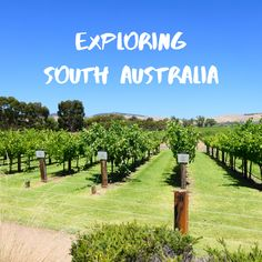 All the best things to see and do and places to explore in South Australia. South Australia, Things To Do, Explore, Places, Outdoor, Outdoors, Lugares, Outdoor Games, The Great Outdoors