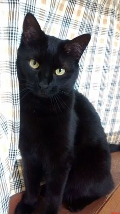 Black cat.  I've had two of the sweetest black cats - Mia and Helloise.  Adopt and love a black kitty!