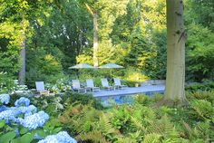 Note the mass plantings - wide swaths of blue and white hydrangea, fern, and astible. (Boxwood Road - Arentz Landscape Architects)