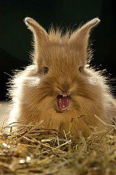 Gillend konijn deel twee