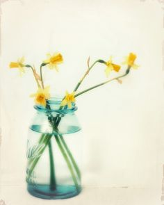"""Flowers in a Jar, Daffodils, Daffodil Photography, Flower Photography, Still Life, Yellow Aqua Wall Art, """"But I Love You Still"""" by Amy Tyler 