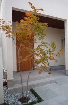 「シンボルツリー モミジ」の画像検索結果