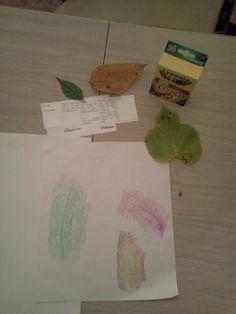 Science Leaf rubbings