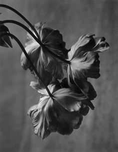 opaqueglitter:  beautiful still life photography fromChristian Coigny.