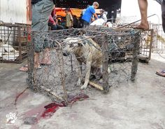 The Indonesian government is being urged to shut down the country's brutally cruel live animal markets, where thousands of dogs and cats a week are bludgeoned in public, blow-torched whilst still alive, and butchered for eating