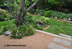 """""""Lori created a bed around the mesquite that's mostly at ground level but also continues at patio level, with feathergrass and pink evening primrose planted directly in the decomposed granite."""""""