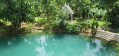 A mystical spring deep in the Westmoreland interior ebbs in dry season before refilling with the rolling thunder Rolling Thunder, Blue Hole, Jamaica, Gardens, Moon, Outdoor Decor, The Moon, Negril Jamaica, Tuin