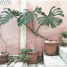 Groen en roze zijn gewaagde kleuren voor je interieur, maar geven een super gaaf effect.
