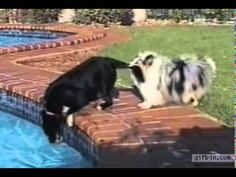 Two dogs' amazing team work will make your day!