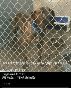 URGENT! IN ROSWELL, NM.... PLEASE HELP! ▪ Due out WEDNESDAY (5-27); needs to be out of the bldg THURSDAY MORNING (5-28) ▪ No. 575-624-6722 Roswell Animal Control 705 E. McGaffey, Roswell, NM 88201 ▪ ✔ PORTER ▪ 1-year-old ▪ Pit ▪ Male ▪ Brindle ▪ Cage #38 | Impound #1973 ▪ **Came in w/Cage #47** ▪ Intake 5-20-15 | Due Out 5-27-15 LINK: https://m.facebook.com/photo.php?fbid=451824741652195&id=176246809209991&set=pb.176246809209991.-2207520000.1432405993.&source=42 ▪ MAIN PAGE LINK…