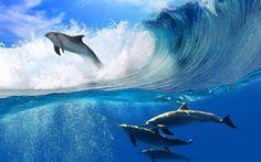 волны - Поиск в Google