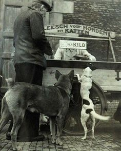street vendor for dogs and cats