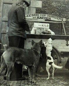 straatventer voor  voer voor honden en katten/ Dog and cat food street vendor