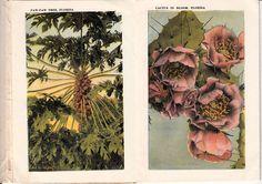 1922 Tropical Florida Vintage Souvenir Folder | eBay