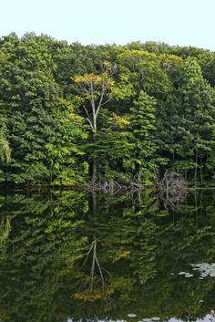 Rockafella preserve . Westchester County New York
