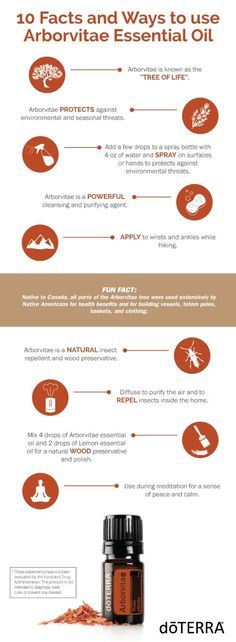 Have you ever wondered what to use Arborvitae for? Here are 10 facts and ways to use this oil!