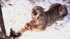 Petition · Congress: Support The Refuge From Cruel Trapping Act (H.R. 2016/5 1081) · Change.org