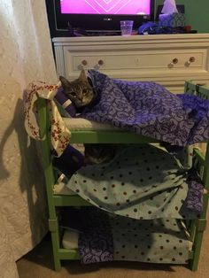 Cute Little Animals, Cute Funny Animals, Funny Cats, Silly Animal Pictures, Cat Bunk Beds, Kittens Cutest, Cats And Kittens, Animals And Pets, Baby Animals