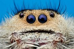 Jumping Spider, Bugs And Insects, Spiders, Octopus, Fascinator, Art Reference, Boards, Creatures, Halloween