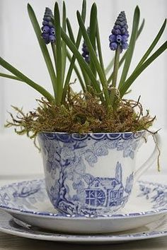 tiny grape hyacinths in a teacup  ~    photo via 'the perfect whimsy' blogspot