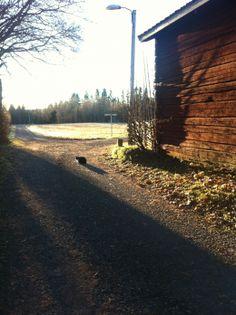 A walk in Grytnäs, Dalarna; Sweden